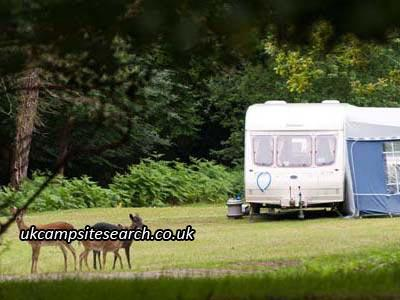 Ocknell and Longbeech Caravan Park and Camping Sites